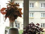 «Цветы – украшение окна»